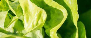 Rohkost Blattgrün ist Leben und Vitalstoffe pur