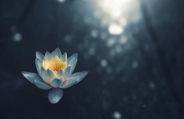 Intuition trainieren mit Dankbarkeit und Wertschätzung