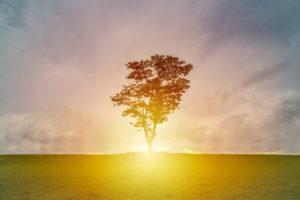 Intuition und Verstand: Was ist der Unterschied?